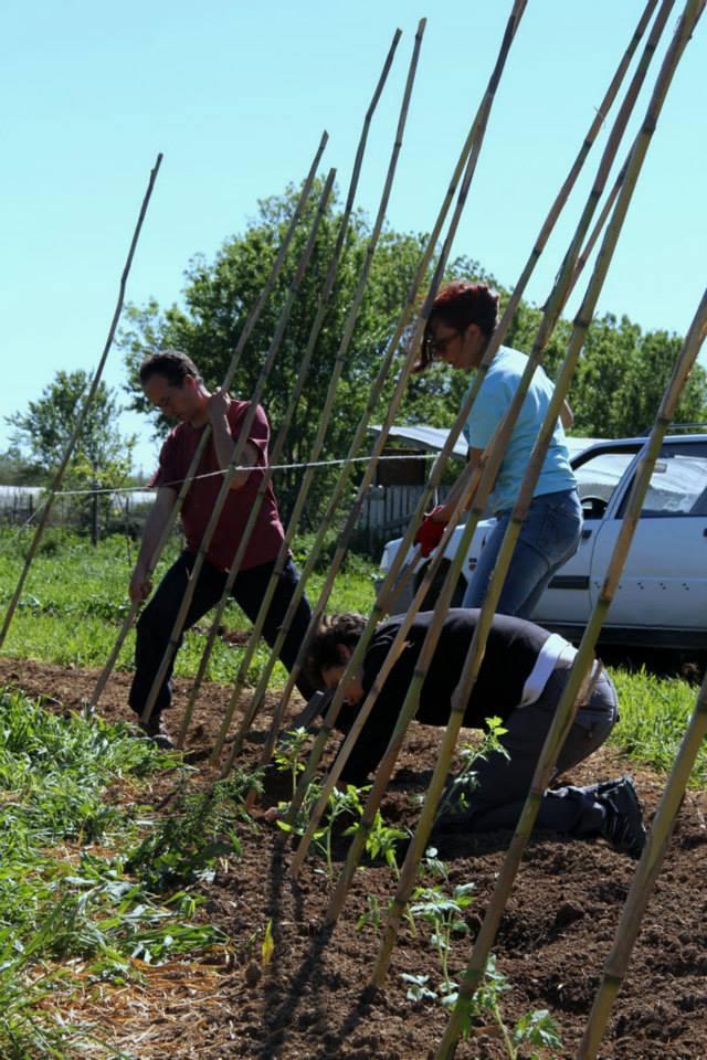 Alter 39 eco 30 jardins vallee verte for Rendement permaculture